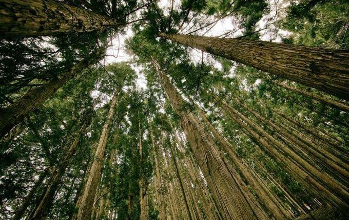 Fenêtre en bois écologique Atulam